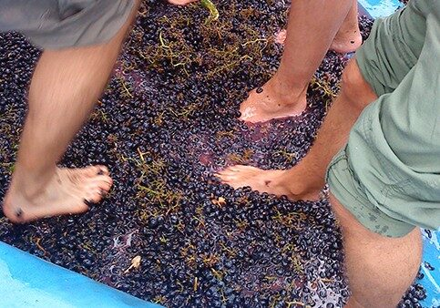 enoturismo_squeezing_grapes-landscape
